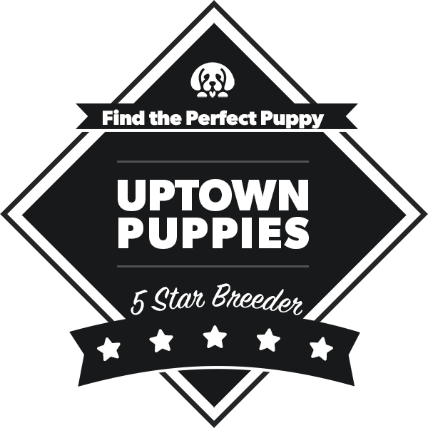 uptown puppies badge