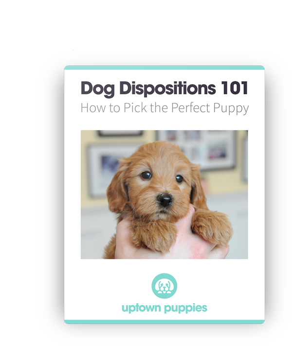 dog dispositions ebook