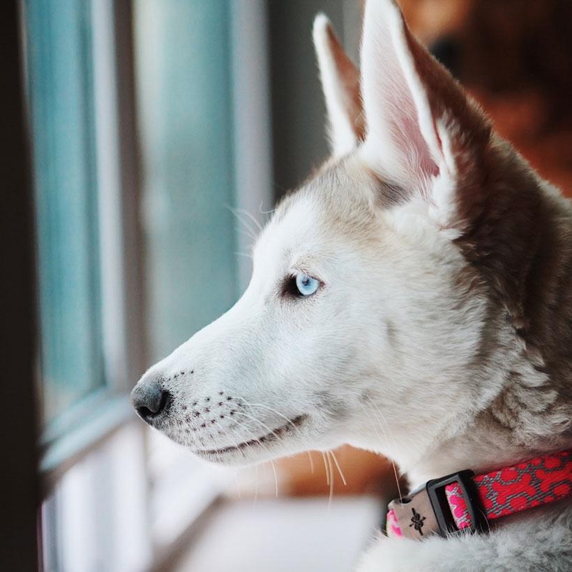 husky (state)