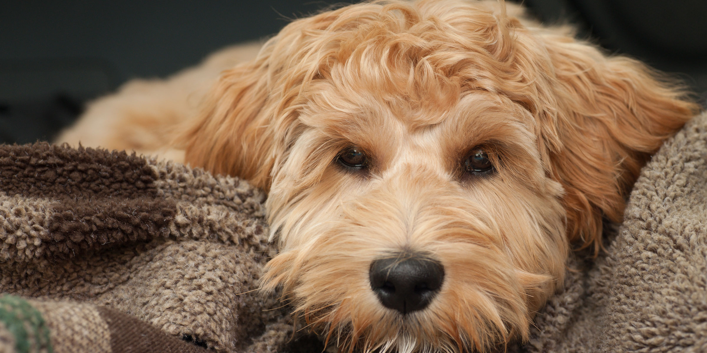 Is Natural Selection Used By Dog Breeders