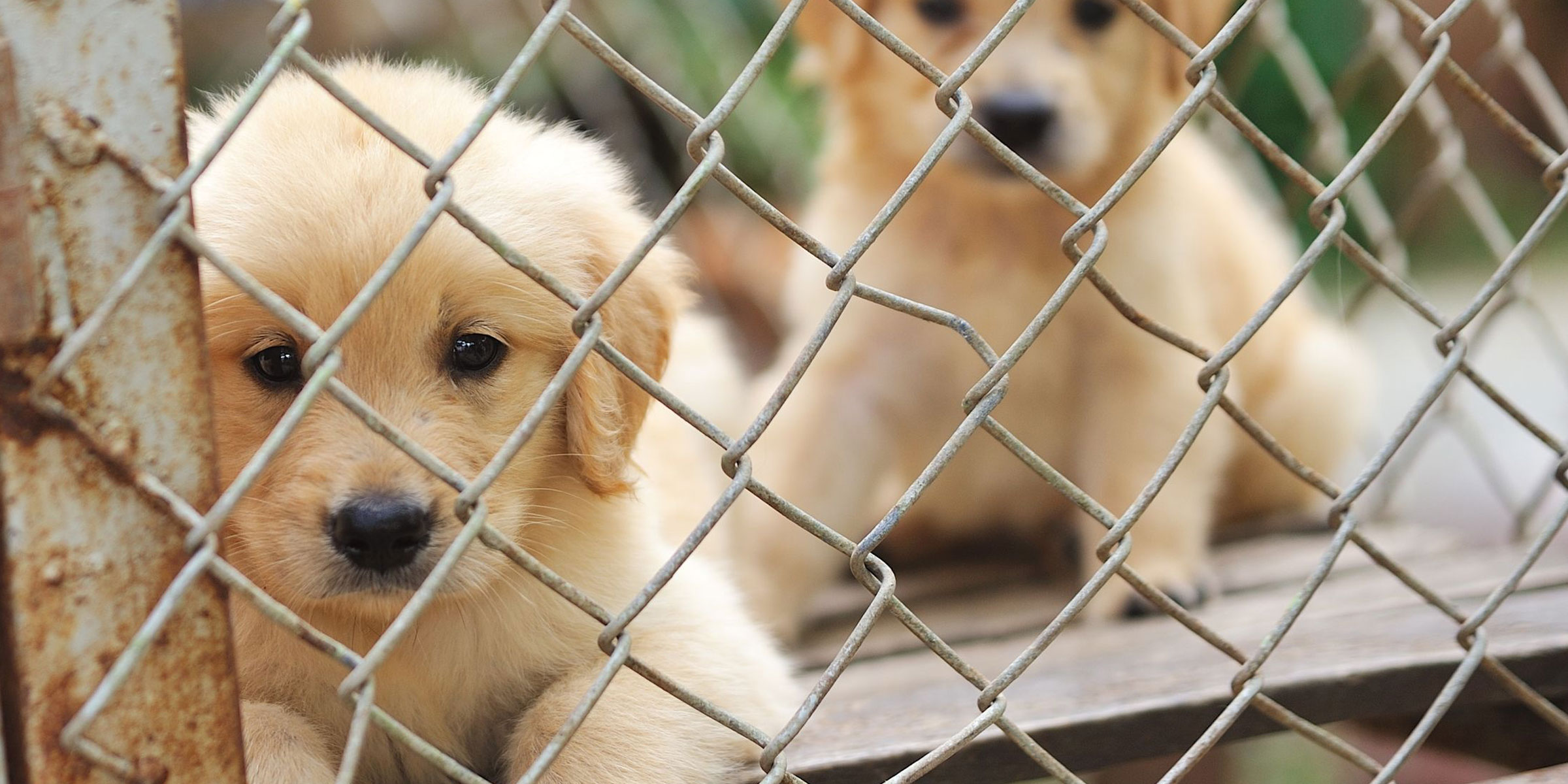 7 Signs Your Dog Came from a Puppy Mill—And Why Puppy Mills Are Totally Inhumane