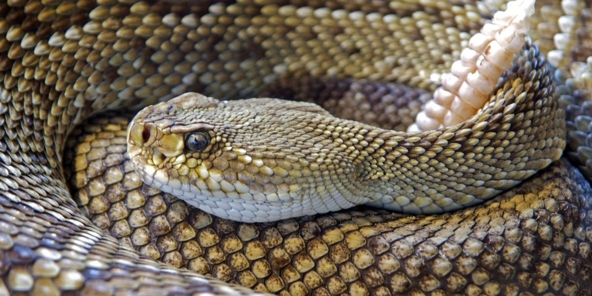 How to Keep Your Dog Safe From Rattlesnakes