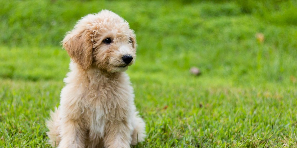 21 Puppy Care Tips That Might Save Your Pal's Life