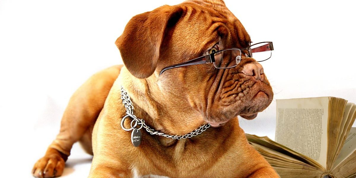Top 10 Smartest Dog Breeds (#7 will surprise you)