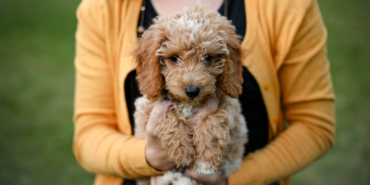 10 Questions Cockapoo Owners Forget to Ask the Vet