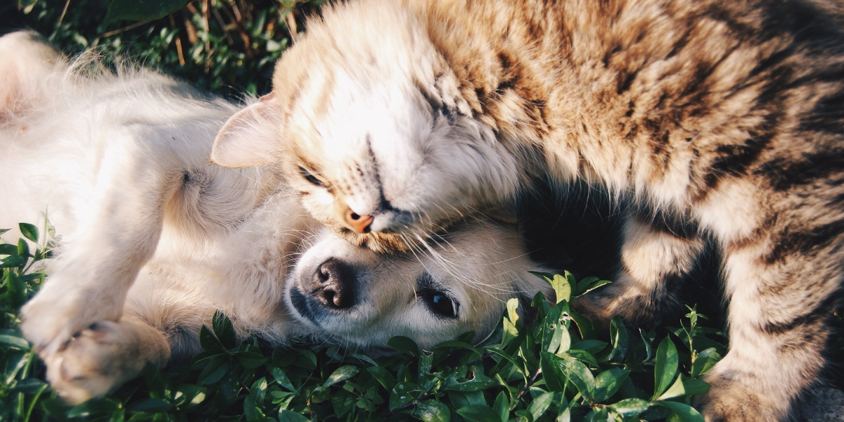 Is Your Cat Scared of Dogs? These Tips Will Help
