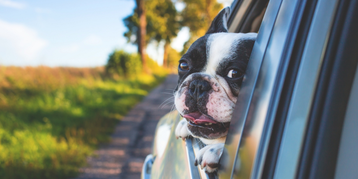 Road Trips with Your Dog: Not as Difficult as You Think