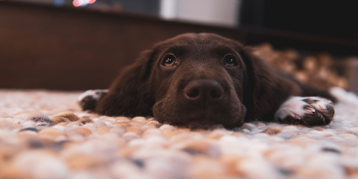 5 Things You Can Do Right Now to Make Your Puppy Happy