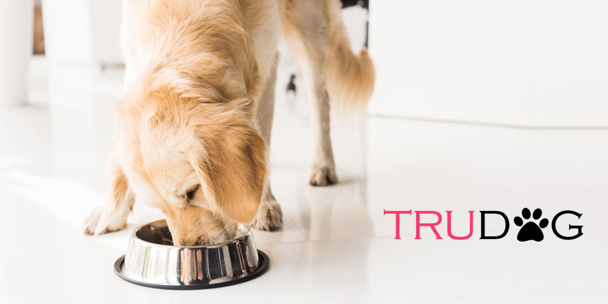 TruDog Review 2019: The Best Raw Dog Food Available?